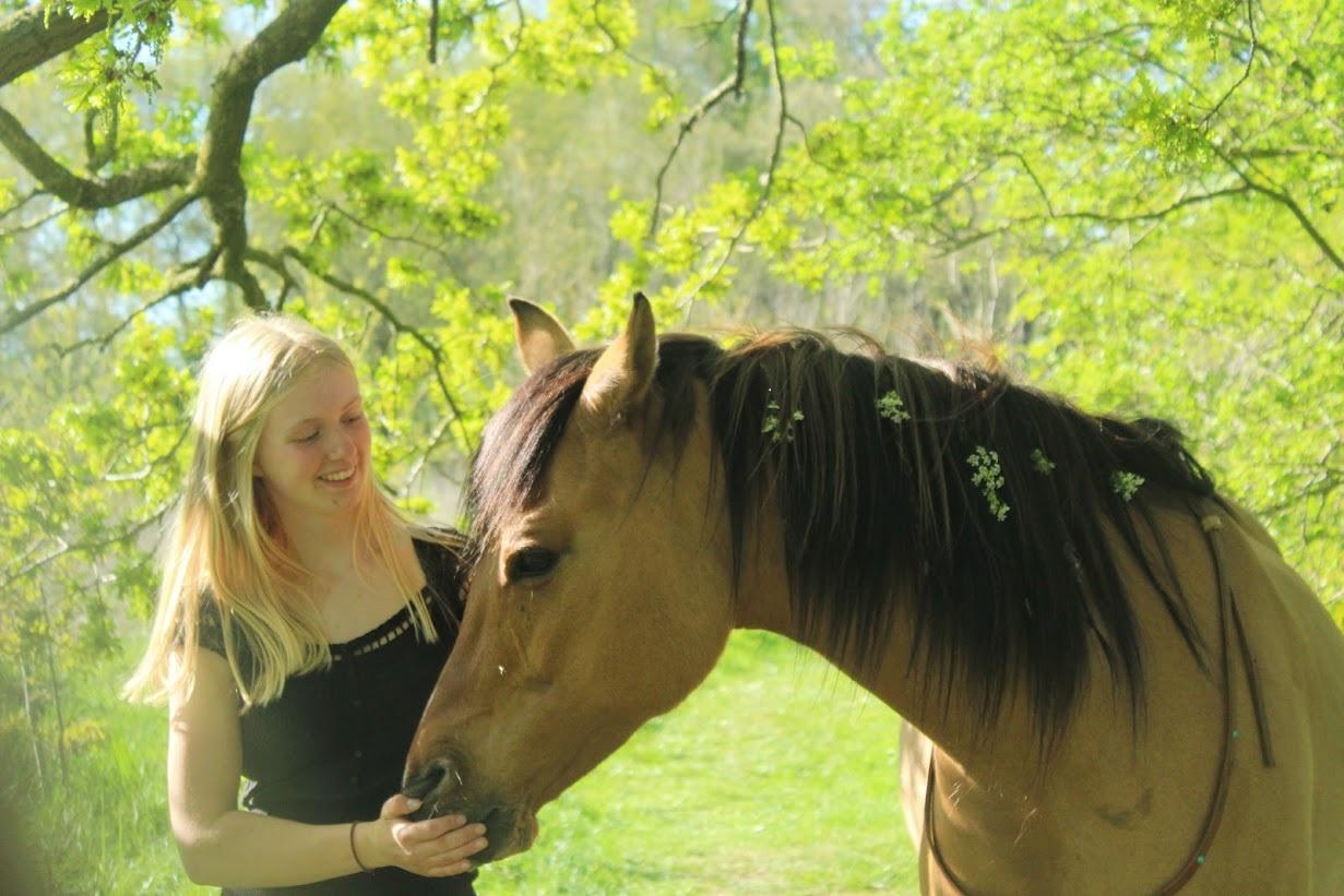 Psychocare - therapie met paarden 1