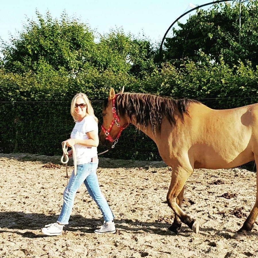Psychocare - therapie met paarden 2