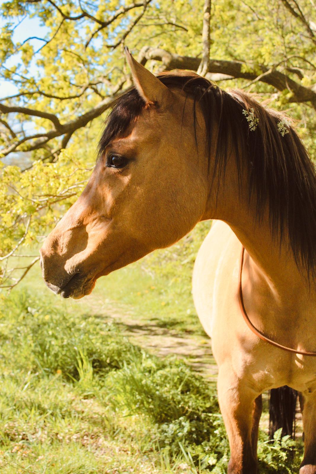 Psychocare - therapie met paarden 3